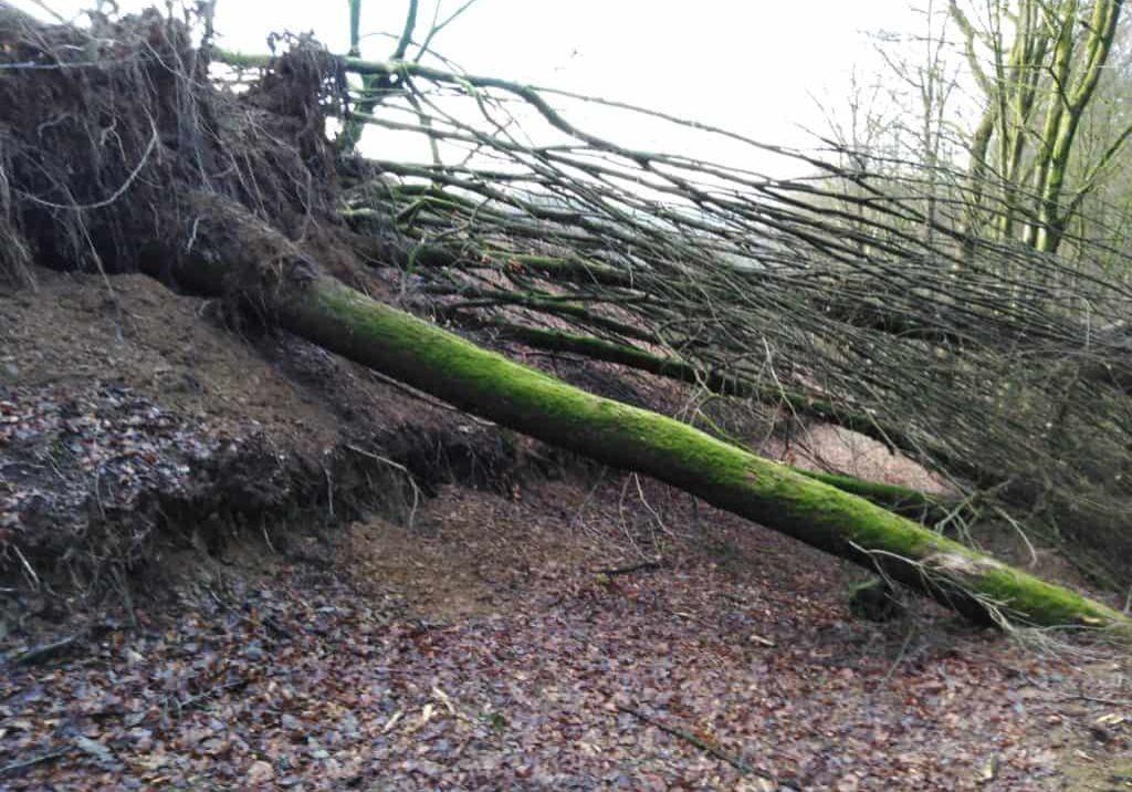 2020-Sturmschaden-Zuweg WWSteig