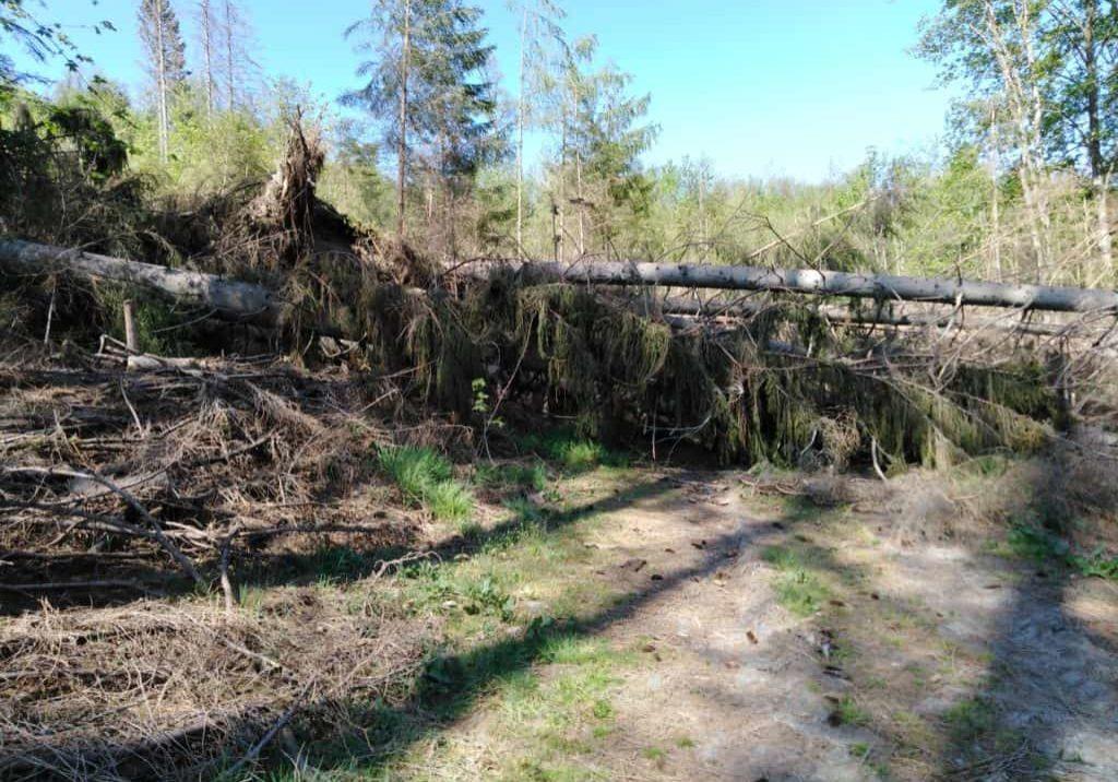Forstschäden